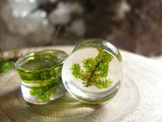 Green Moss Branch Gauges Natural Organic Ear Plugs by AlpacaBlue