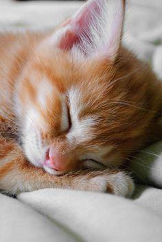 My baby.  He was so cute when he was sleeping!