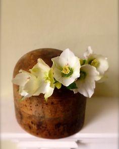Hellebore flower crown.