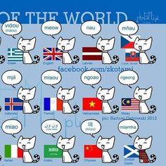 International cats.