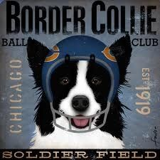 Border Collie :)
