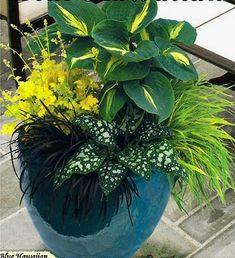 Perennial foliage for shade: hosta, Japanese hakone grass, pulmonaria Dark Vader, black mondo grass, heuchera Lime Rickey by marva