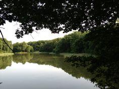 Omgeven door een bos vind je in Drenthe het Zwanemeer. Eindeloos staren, je gedachte op nul en heerlijk tot rust komen. Locatie: Gieten. Foto: Eliza.