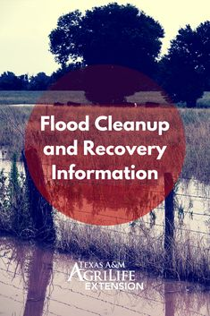 When you ever need support with #flooddisaster Flood Cleanup, Flood Prevention, Texas Flood, Central Park Manhattan, Flood Damage, Honeymoon Places, Flood Insurance, Cairo Egypt, Disaster Preparedness