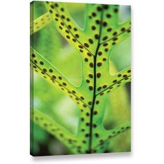ArtWall Kathy Yates Hawaiian Laua'e Fern Gallery-Wrapped Canvas, Size: 24 x 36, Brown