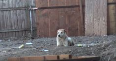 Dog Living On The Street After Her Mother Was Killed Avoided Rescue Time After Time