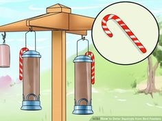 how to get rid of black birds from your feeder