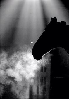 All The Pretty Horses, Beautiful Horses, Animals Beautiful, Horse Photos, Horse Pictures, Equine Photography, Animal Photography, Abstract Photography, Zebras