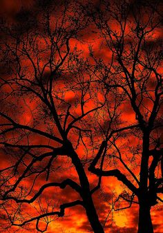 ✯ Leafless Elms ~by TravelsThruTheUniverse✯  the red of autumn...  awesome sunset/sunrise