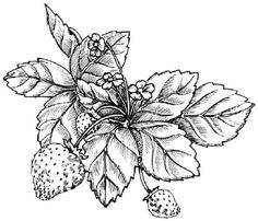 To draw a strawberry, examine the strawberry illustration before proceeding to step 1.
