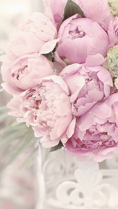 "Pretty pink peonies ""TREE"" PEONY King of Flowers; - Pretty pink peonies ""TREE"" PEONY King of Flowers; When its rich buds explode in the -"