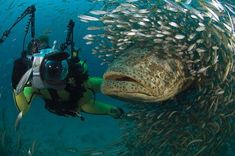 when i dived amongst the groupers and those lil fish..the docile huge grouper fish didnt scare me, as much as all those lil fish looking like they have teeth!