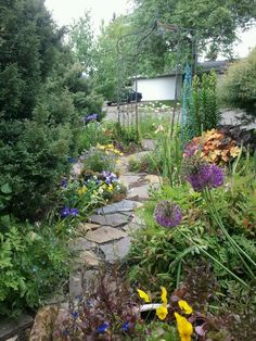 1000 Images About No Mow Front Yard On Pinterest Front