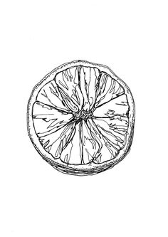 Ink Drawing Detailed observation: orange in pen and ink Cute Tattoos, Small Tattoos, Ink Tattoos, Art Sketches, Art Drawings, Art Aquarelle, Observational Drawing, Tatoo Art, Ink Illustrations