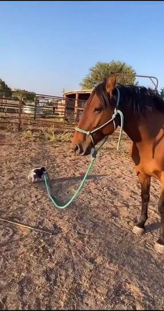Baby Animals Pictures, Cute Animal Photos, Cute Animal Videos, Funny Animal Pictures, Baby Animals Super Cute, Cute Baby Dogs, Cute Little Animals, Cute Puppies, Funny Horse Videos