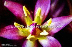 HEART OF THE FLOWER. http://www.liveeachadventure.com/our-own-original-digitalart-images/