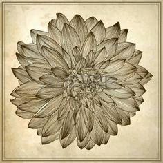 dessin de fleur de dahlia sur fond grunge. Élément à votre style de gravure conception, Banque d'images - 15555324
