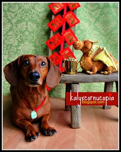 This is a great blog, funny and a sweet doxie and toy duk duk!