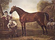 Puro-sangue inglês – Wikipédia, a enciclopédia livre
