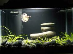 Tank Ideas For Bettas Google Search Betta Aquarium Stand Setup