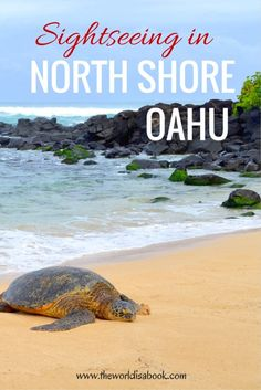 Read on to find out what you can do and see on a sightseeing tour or one day itinerary in the North Shore of Oahu, Hawaii. Surfers and turtles included!