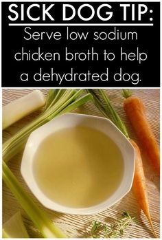 Is your dog sick? Try this Homemade Chicken Broth for Dogs – great for a dog that is dehydrated. and Tips & Hacks For Your Dog ...that you wish you knew a long time ago