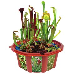 <div>Grow your own collection of feared and famous meat eating plants! This deluxe edition has s...
