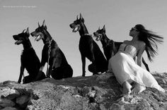 this has become one of my dreams, I'm not sure I'll ever get a different kind of dog breed.  Doberman dogs