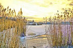 Kiskunhalas, lake, winter, snow, ice, reed, by Ramona Rekasi
