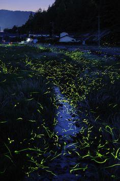 Slow Shutter Japanese Fireflies