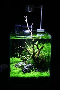 143 best nano tank setup tag images in 2019 aquascaping fish
