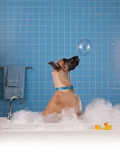 Helpful head-to-toe dog grooming tips—including a natural skunk odor remover formula and flea and mosquito repellants