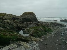 Tidal pool and rocks, Rialto Beach, Olympic Peninsula, Washington state Photo by Carolan Ivey.