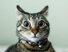 The 100 greatest cat photos ofall time