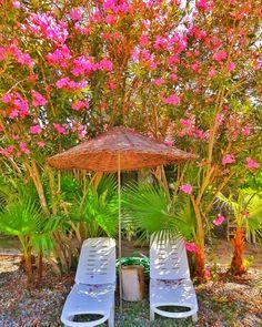 Marmaris, Glass Vase, Nature, Home Decor, Garden, Naturaleza, Decoration Home, Room Decor, Nature Illustration