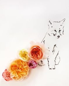 No. 9890 fox and flower. $30.00, via Etsy. fine art photography