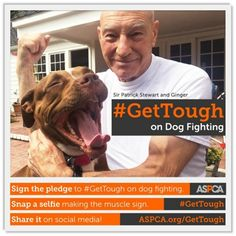 Sir Patrick Stewart Joins National Dog Fighting Awareness Campaign - April 8 is National Dog Fighting Awareness Day!  Throughout the month of April, the American Society for the Prevention of Cruelty to Animals, or ASPCA, is urging animal lovers across the country to #GetTough on dog fighting.  Always report dog fighting •HSUS Dog Fighting Hotline 1-877-847-4787- answered 24/7!  For the LOVE OF DOGS, Please Share Widely!