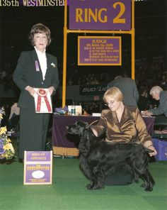 GCH Seabreeze The Secret Storm RN CGC, Jada BOS at Westminster KC 2011