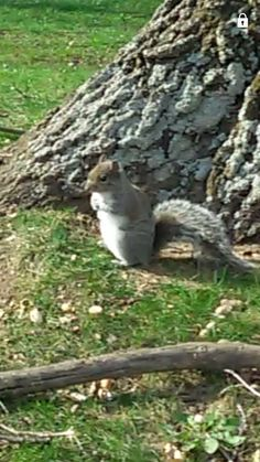 The photo quality here is awful,  because its actually a screenshot from a video but Pinterest wont let me pin that. (So ignore that little lock on the upper right hand corner from my video player) this little squirrel is just chillin behind the house. I fed him a peanut and he's begging for more now😂 I think I'm making friends with nature. His name is Chip. Busy being a Disney princess right now