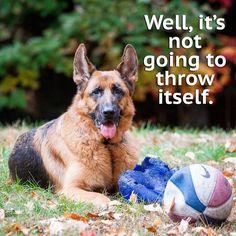 Dog Quote, Dog, German Shepherd