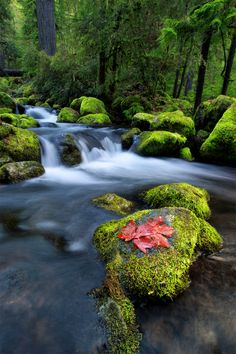 Contrast of Nature  by Bsam  on 500px