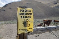 The reality our wild ones live in very rarely rules the management of the range, resource and wild horses. Watching the decision making process is often like watching multiple storm fronts hit a co…