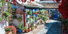"""Córdoba's colorful """"Festival de los Patios"""" and cultural heritage. http://spainatm.com"""