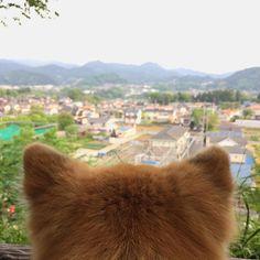 おはようございまーす♪⛅️ Good morning!👍 日曜日、大型連休最後の朝のおさんぽたいむing🐾 昨日は30℃まで気温が上がり、とても暑い1日になりました。💦 明日に備えて、いつもの時間いつものコースを歩いています👣🐾 ゴールデンウイーク最終日、楽しく元気に笑顔で頑張って生きましょうね!✌️ Have a nice day!💕🤗 日本の反対側のみなさんは、 Have a nice dream.💕😴 #愛犬#ちばわん#保護犬#dog#mixdog#inu#犬#イヌ#いぬ#ペット#pet#ふわふわ#後頭部#後ろ姿#風景#空#sora#sky#イマソラ#お散歩#おさんぽ#散歩#武蔵五日市#Photo#あきる野市#写真