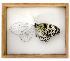 """""""Influenced by children's book 'the butterfly workshop' by Gioconda Belli, where a boy dreams of one day creating a cross between a bird and a flower,  Netherlands-based artist Anne Ten Donkelaar has taken this imaginative concept and created 'Broken Butterflies', a series of hybrid insects. the collection features damaged specimens which are repaired based on their existing condition through detailed pieces of textile, elements found in nature and mechanical gadgetry."""""""