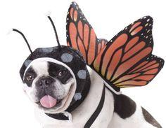 Animal Planet Dog Costume Butterfly Hunde Fasching Kostüm... https://www.amazon.de/dp/B004UUKIY4/ref=cm_sw_r_pi_dp_x_tn7GybD67MKMQ