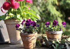 Hana N. - flowers, garden