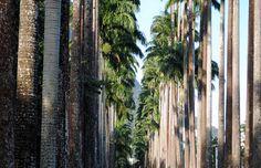 Vai ao #Rio? Não deixe de visitar o Jardim Botânico. Muitas dicas no nosso blog.