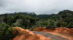 """Ambon - Waai - Bush nearby """"waai"""" a village on Ambon Island, Maluku."""