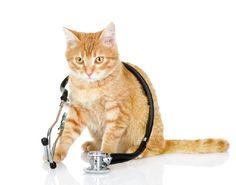 A administração de antibióticos para gatos deve ser feita sob supervisão veterinária. Saiba as principais doenças combatidas pelos antibióticos para gatos.